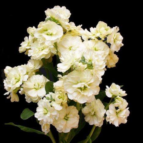 Hydrangea bridal bouquet tutorial adding stock flower mightylinksfo